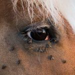 7 Ways to Keep Flies Away from Your Horse