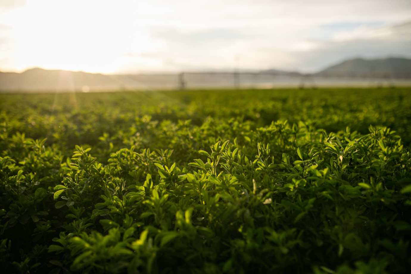 Standlee Premium Western Forage® Products are the Best in Quality